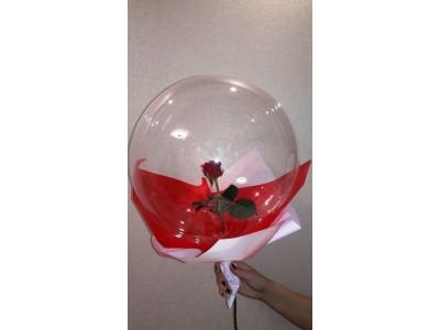 Живая роза в шаре